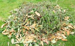 ramassge des feuilles Tremblay-en-France
