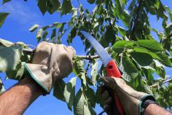 abattage arbre Tremblay-en-France